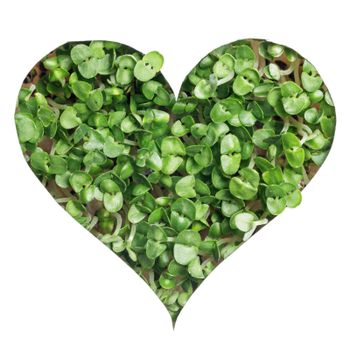 Sprout green plants growing a heart shape isolated on white background
