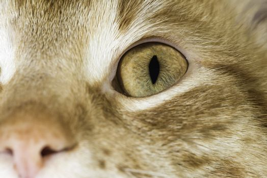 Orange cat close up eyes