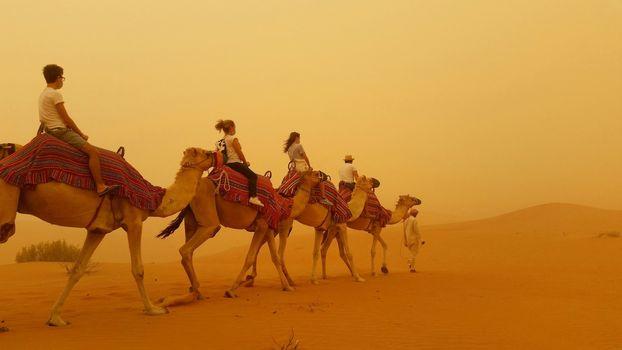 Walking camels in a sandstorm