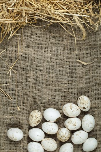 Organic white domestic eggs on sackcloth and straw