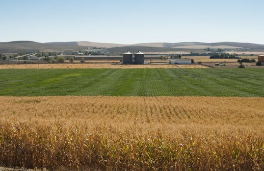 Corn plantation and processing plant factory