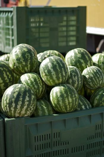 Watermelons in large crates