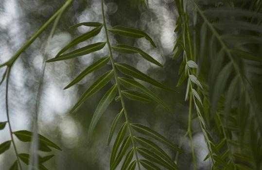 Elongated leaves