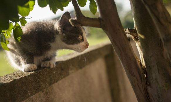 The kitten ready to jump