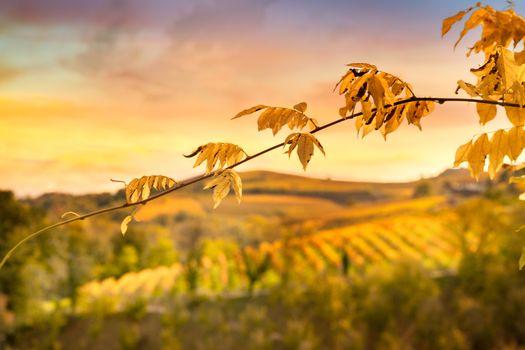 autumn and wine spirit