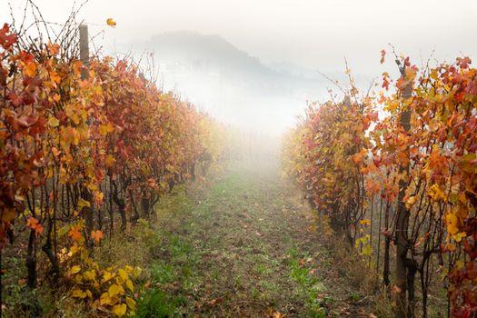Landscape of Barolo wine region