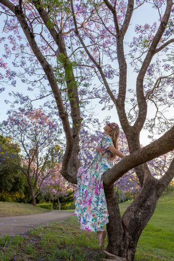 A woman sits in the branch of a tree admiring purple Jacaranda f