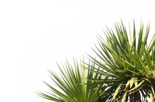 green fresh tropical plant on a white background isolated close up