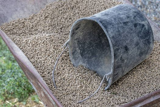 Wheelbarrow with pressed feed chunks as food for young cows and a black bucket