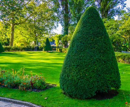 freshly pruned conifer tree in a beautiful garden, Gardening and upkeep, pruning art