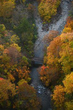 Autumn forest in a river valley in Tohoku region near Aomori