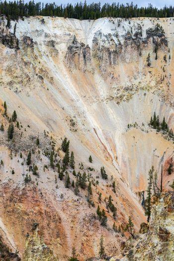 Vertical scene of hill and slope of Grand Canyon of the Yellowstone, Yellowstone National Park, Wyoming.