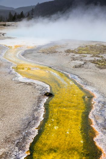 Boiling water from geothermal heat of geyser basin flowing around area making yellow and other colors due to level of temperature and kind of bacteria inside.
