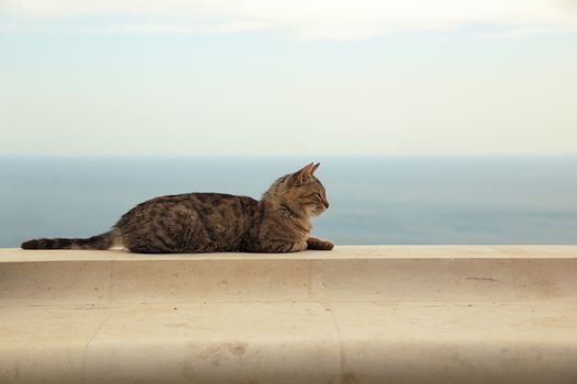 relaxing crimean cat