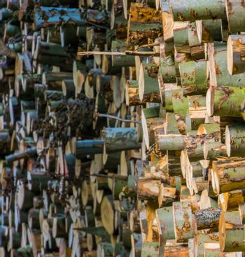 accumulated tree logs, big pile of cut tree trunks, pattern of lumbered fire wood