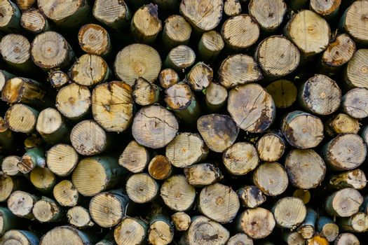 pattern of wood logs, cut tree trunks background, piled fire wood in closeup