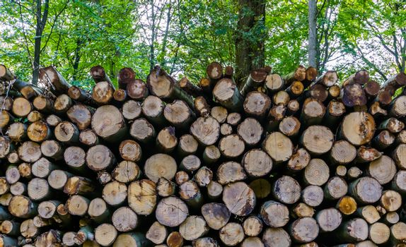 large piled wood logs in the forest, deforestation in liesbos breda, the netherlands