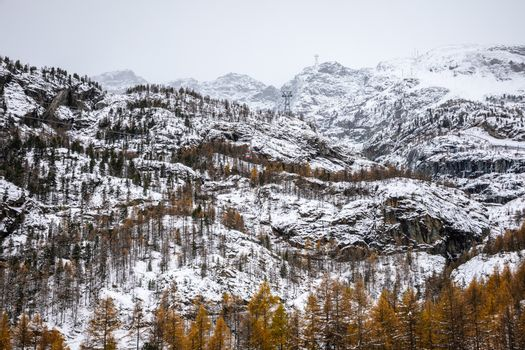 Rock mountains and pine forest covered by snow, trees change color to orange in winter of Furi, Zermatt, Switzerland.