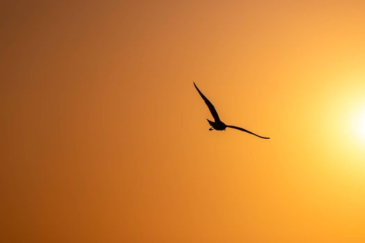Silhouetted seagull flying freedomly with bright orange sky at sunrise.