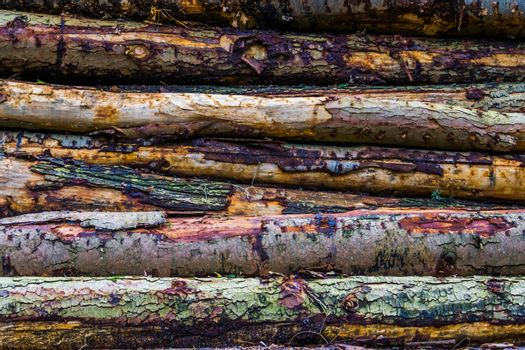 pattern of tree trunks, wood logs with bark, Deforestation and nature background