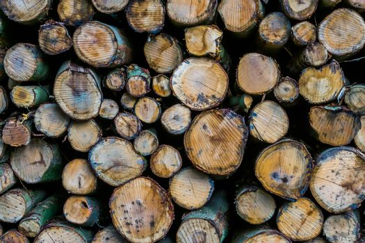 diverse wood logs in closeup, nature pattern background, lumbered fire wood