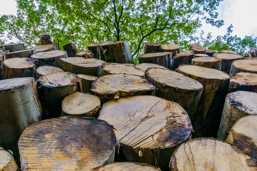 closeup of a woodlog pile in the liesbos forest of breda, the netherlands