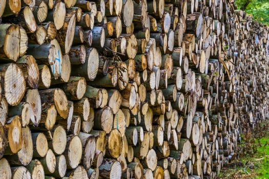 massive pile of wood logs, tree trunk pattern background