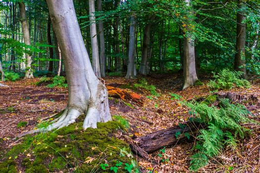 beautiful forest scenery of the liesbos in Breda during autumn, Dutch woods in the Netherlands