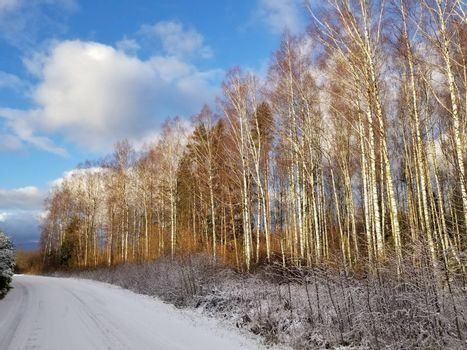 View of a road covered with snow and a winter birch forest against a blue sky.