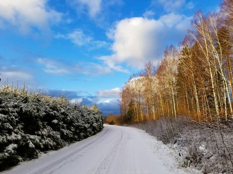 View of a road covered with snow and winter birch and spruce forest against a blue sky.
