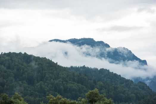Forested mountain slope in low lying cloud with green conifers shrouded in mist in Altai Mountains