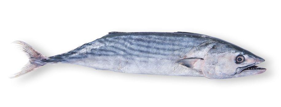fresh tuna on white background