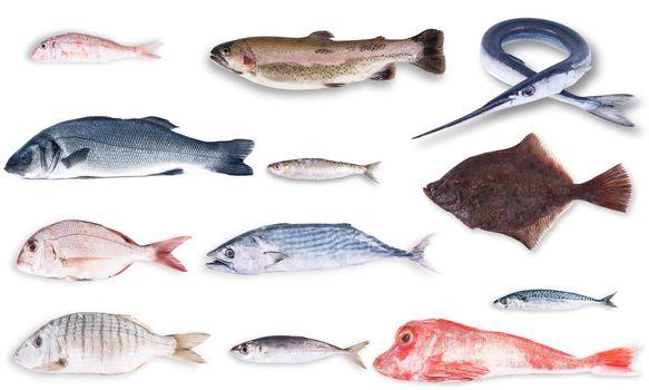 fresh fish collage on white background