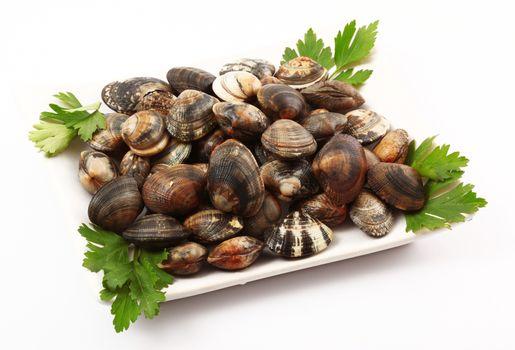 isolated fresh clams on white background