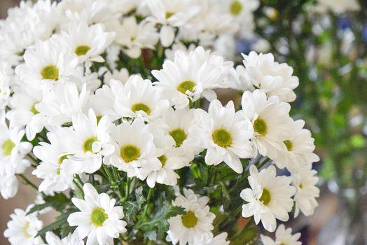 Bouquet of white camomiles, studio shot. Selective focus. Romance concept.