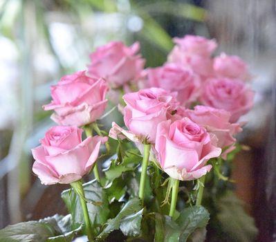 Bouquet of fading pink roses, studio shot. Selective focus. Romance concept.
