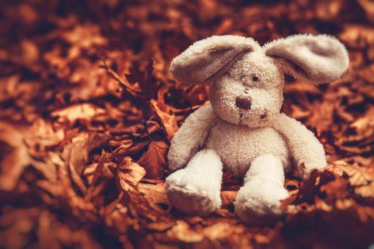 Little sad rabbit
