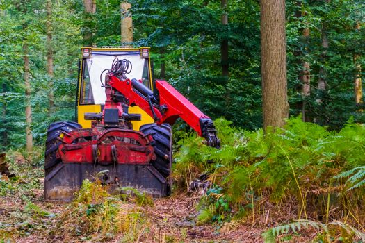 Bulldozer driving in the forest, deforestation and environmental awareness, Nature reserve upkeep