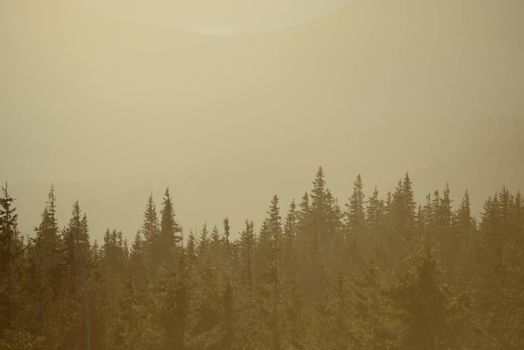 Fir Trees on the Mountain Hills in the Morning Fog. Beautiful Forest and Mountains Background.