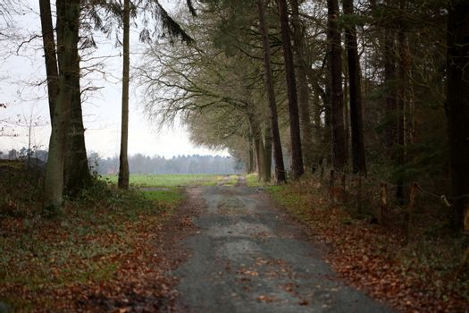 Forest road in wild nature background high quality fifty megapixels dorsten rhade