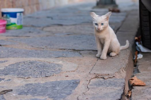 a very cute little white feline standing at sideway and looking to camera. photo has taken at izmir/turkey.