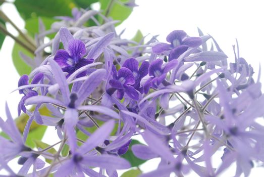 Purple fresh flowers.