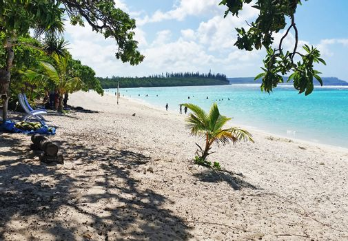 Sandy  Beach with a tree in New Caledonia