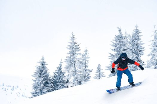 Snowboarder Riding Snowboard on the Slope near Fir Trees in the Mountains. Snowboarding and Winter Sports Concept.