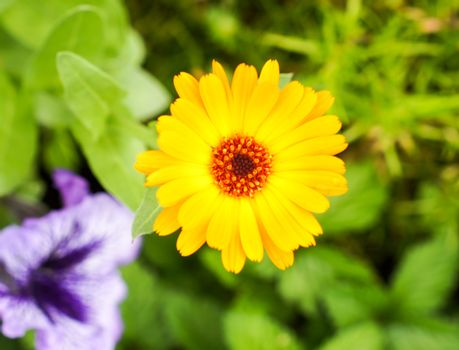 Beautiful yellow flower outdoors in summer on a bright sunny day