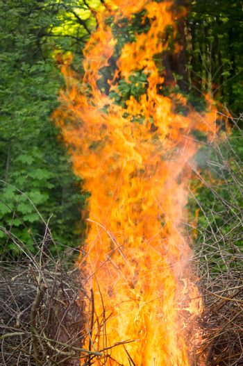Bright big bonfire while burning a large number of garbage branches