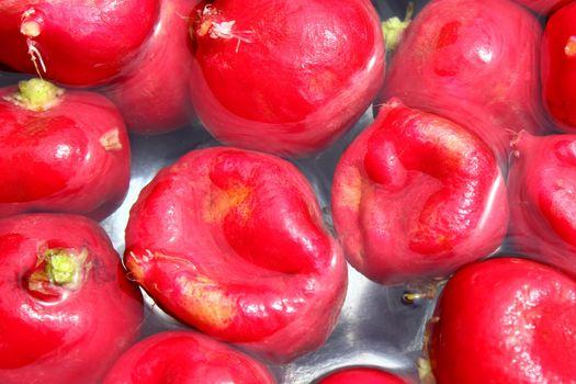 red radish in the garden