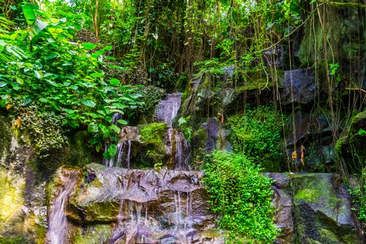 steaming water of rocks in a jungle scenery with many plants, nature background