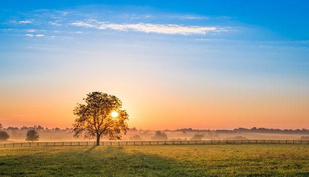 Sunrise Behind a Tree.