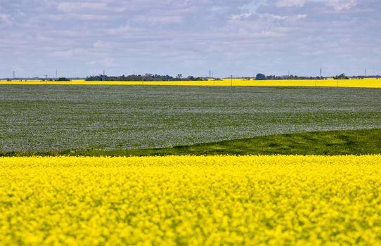 Flax and Canola Canada